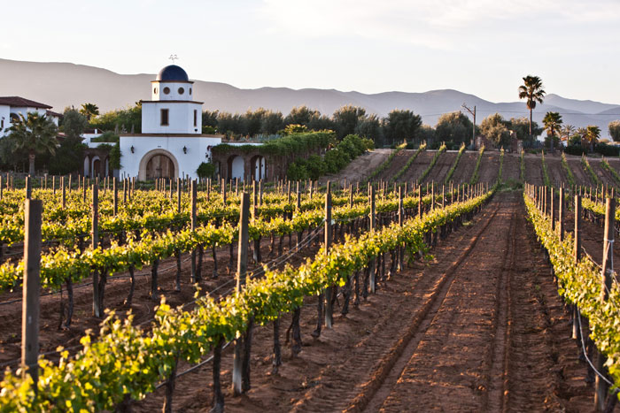 Cheap Flights - Baja Adobe Guadalupe winery