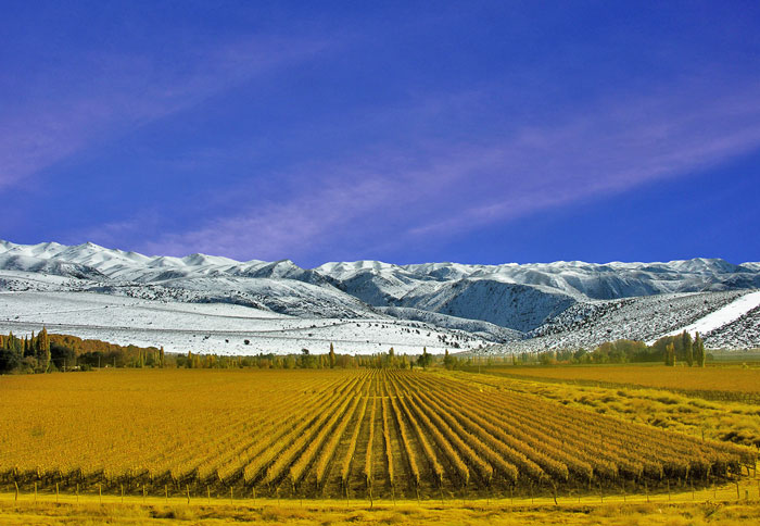 Cheap Flights Viñedos Mendoza